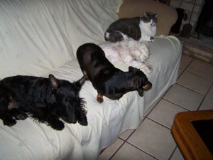 Mini, Be-Be,Manley and Fat Cat on the couch...