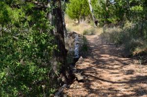Pine Ridge Trail leading left