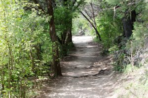 Barton Creek Greenbelt Loop 360 trail
