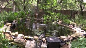 Frank's New 6000 gallon Pond