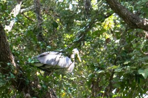 Heron perched in trees