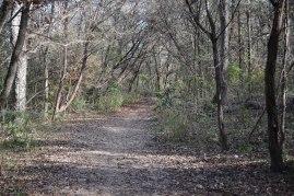 Barton Creek Greenbelt walk in December, 2014.