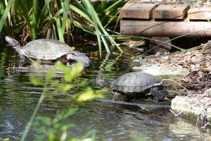Turtles 3-24-2105-5