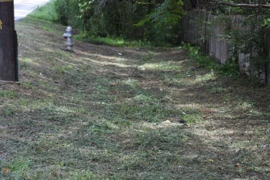 Looks like a hay field.