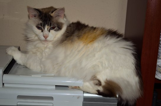Ellie on the printer