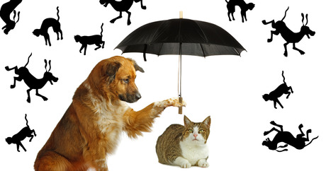 file_20669_column_where-did-the-saying-raining-cats-and-dogs-come-from