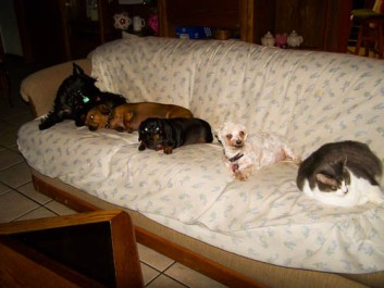Minnie, Abigail, Be-Be, Manley and Fat Cat
