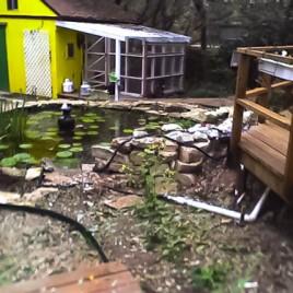 Original pond standing on the deck